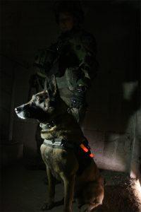 marquage lumineux d'un chien pour opération tactique
