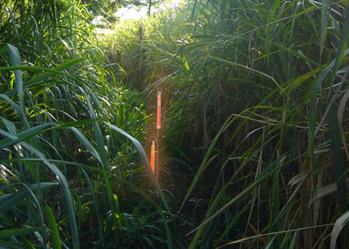 piquet métallique support pour bâton lumineux dans végétation dense